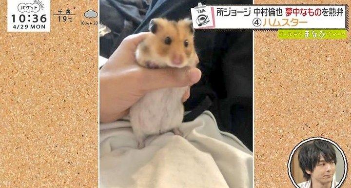 中村倫也 ハムスター ペット かわいい 画像 動物好き ものまね